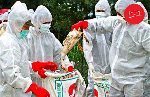 bird-flu1-620x400
