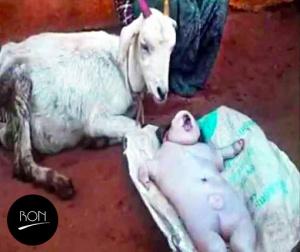 goat-human